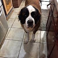 Adopt A Pet :: Wally - McKinney, TX
