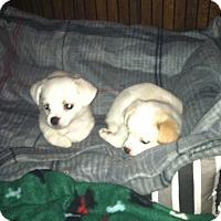 Adopt A Pet :: Noel & Holly - Clarksville, TN