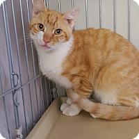 Adopt A Pet :: BONZO - Phoenix, AZ