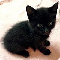 Adopt A Pet :: Augustus - River Edge, NJ