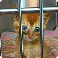 Adopt A Pet :: Bug - Benton, LA