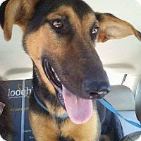 Adopt A Pet :: Duchess - Billerica, MA
