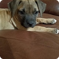 Adopt A Pet :: Bindi - San Diego, CA