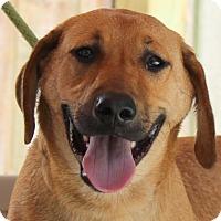 Adopt A Pet :: Roxie Moxie - Locust Fork, AL