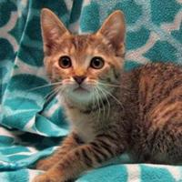 Adopt A Pet :: Charlotte - Fayetteville, TN