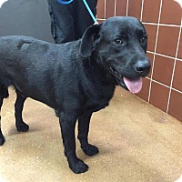 Adopt A Pet :: Max (Courtesy Henry) - Homestead, FL