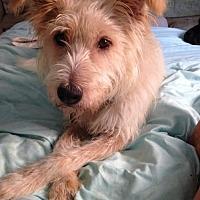Adopt A Pet :: Miss Moffett - Newport Beach, CA