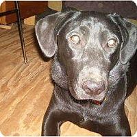 Adopt A Pet :: Lexi - North Jackson, OH