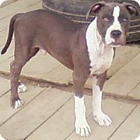 Adopt A Pet :: Reggie - Toledo, OH