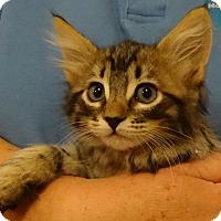 Adopt A Pet :: ZORRA - Diamond Bar, CA