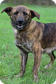Shepherd (Unknown Type) Mix Dog for adoption in Waldorf, Maryland - Serenity