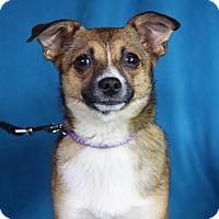 Adopt A Pet :: Fern - Minneapolis, MN