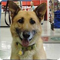 Adopt A Pet :: Max - Fort Worth, TX