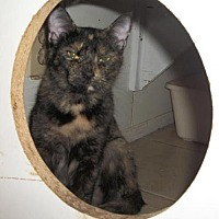 Adopt A Pet :: Mew - Lacon, IL