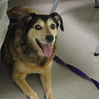 Adopt A Pet :: Casey - Colfax, IL