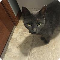 Adopt A Pet :: Moana - Rochester, MN
