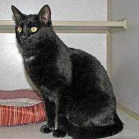 Adopt A Pet :: Midnight - Ruidoso, NM