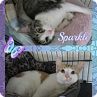 Adopt A Pet :: Sparkle - Corinth, NY