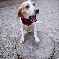 Adopt A Pet :: Gus - Holland, MI