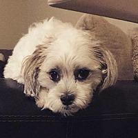 Adopt A Pet :: Remey - Omaha, NE