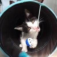 Adopt A Pet :: Alan - Encinitas, CA