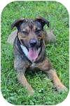 German Shepherd Dog/Doberman Pinscher Mix Dog for adoption in Rochester, New Hampshire - Neyteri
