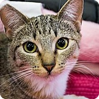 Adopt A Pet :: Emmy - Long Beach, CA