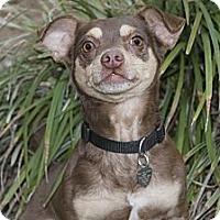 Adopt A Pet :: B B - North Palm Beach, FL