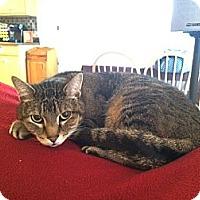 Adopt A Pet :: Jem - Nolensville, TN
