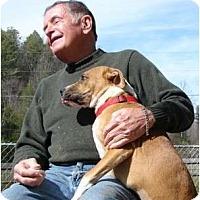 Adopt A Pet :: Cricket - Afton, TN