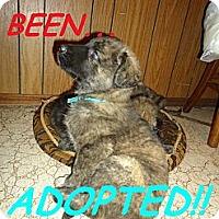 Adopt A Pet :: BurtonADOPTED - Toronto/Etobicoke/GTA, ON