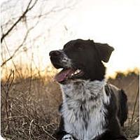 Adopt A Pet :: KashADOPTED!!! - Toronto/Etobicoke/GTA, ON