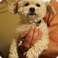Adopt A Pet :: Remy - Wytheville, VA