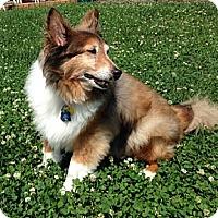 Adopt A Pet :: Spike - Charlottesville, VA