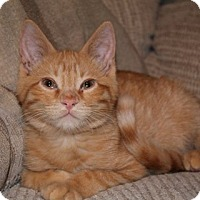 Adopt A Pet :: Pasco - Clearfield, UT