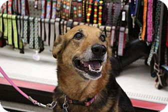 German Shepherd Dog Mix Dog for adoption in El Cajon, California - Stitch-Adoption Pending