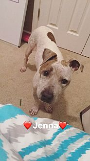 Boxer Mix Dog for adoption in Prairieville, Louisiana - Jenna