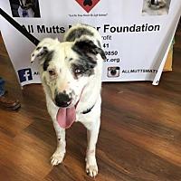 Adopt A Pet :: Baine - Wilmington, DE