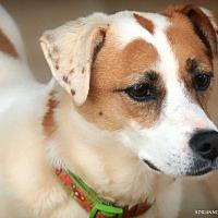 Adopt A Pet :: Jewels - Fayetteville, GA