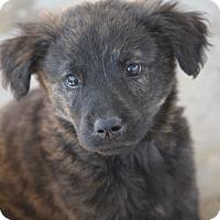 Adopt A Pet :: Tara D. ADOPTION PENDING - Hooksett, NH