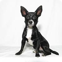 Adopt A Pet :: Diego - Lufkin, TX