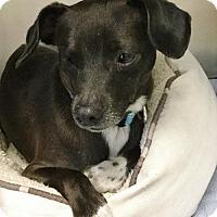 Adopt A Pet :: Al - Suwanee, GA