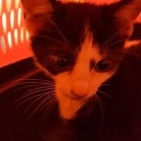 Adopt A Pet :: 35663176 - Mesquite, TX