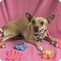 Adopt A Pet :: Hazel - La Verne, CA