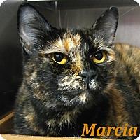 Adopt A Pet :: Marcia - El Cajon, CA