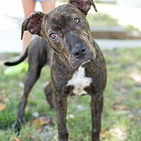Adopt A Pet :: Taffy - Broken Arrow, OK