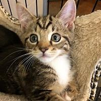 Adopt A Pet :: Umber - Versailles, KY