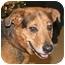 Photo 1 - Shepherd (Unknown Type) Mix Dog for adoption in Osseo, Minnesota - Taz
