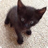 Adopt A Pet :: Eboni - Orlando, FL