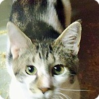 Adopt A Pet :: Shiloh Boy - Riverhead, NY